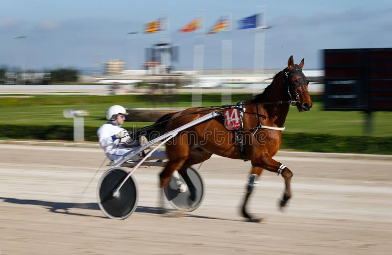 Horse harness racing in palma de mallorca hippodrome panning. Panning image on a rider during a horse harness race or sulky racing in Palma de Mallorca´s stock photos