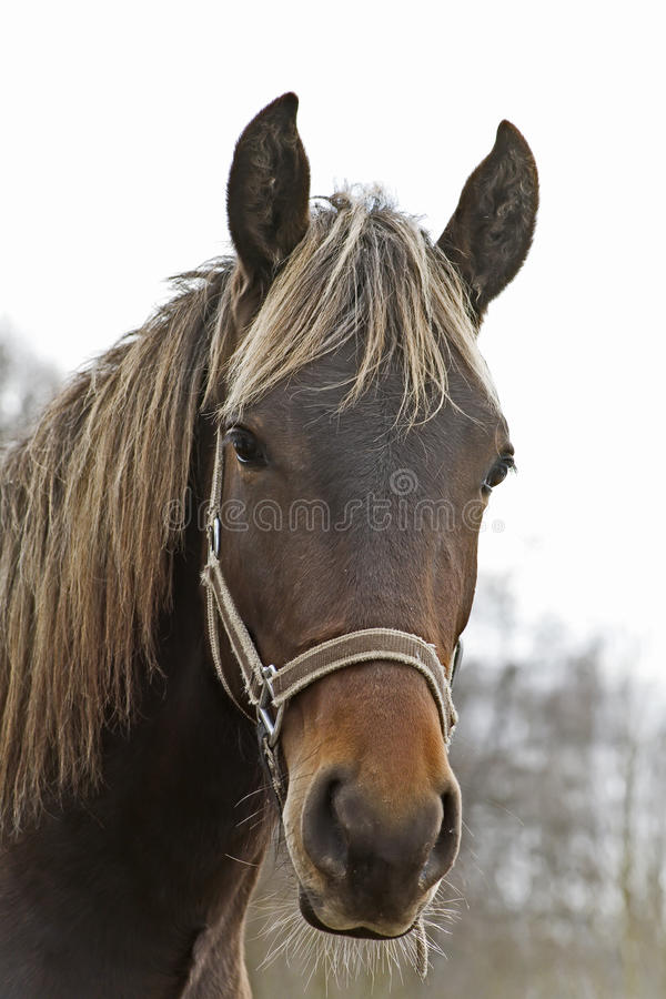 Horse head. Open air, portrait facial, rural royalty free stock images