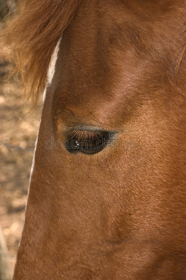 Download Horse Head stock image. Image of expression, sport, closeup - 465179