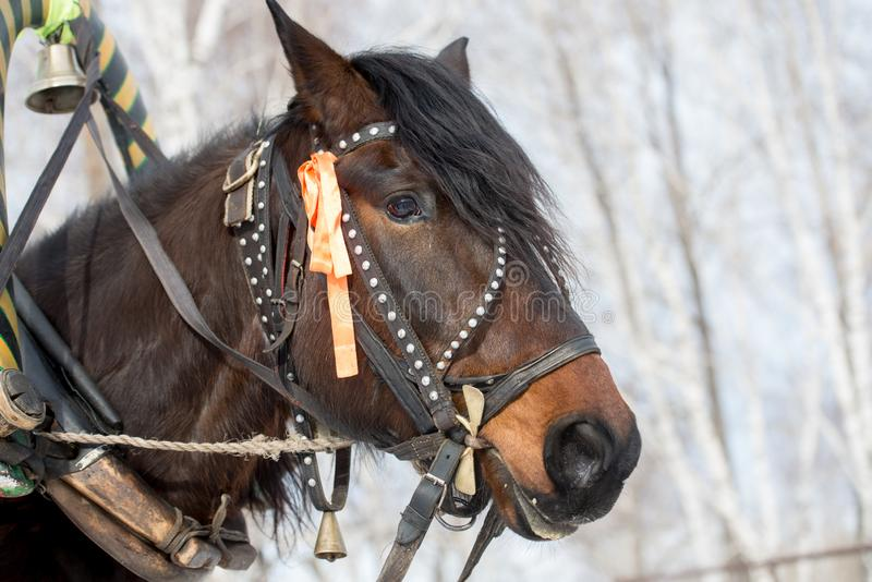 Horse head in bridle with ribbon. And bell stock image