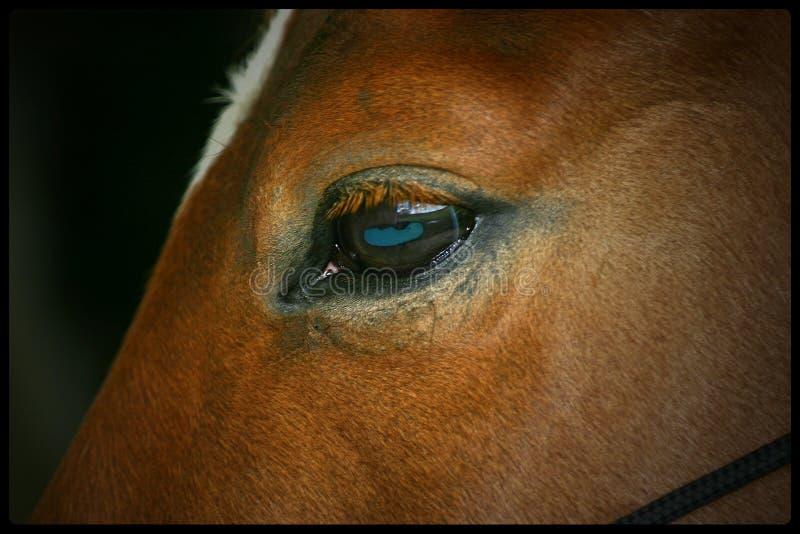 Horse Eye, Reflecting Landscape Stock Photo - Image of