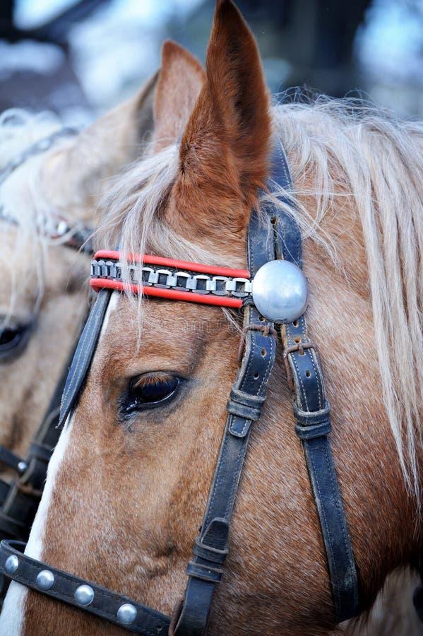 Horse head closeup. The head of a horse closeup in the wintering season stock photo