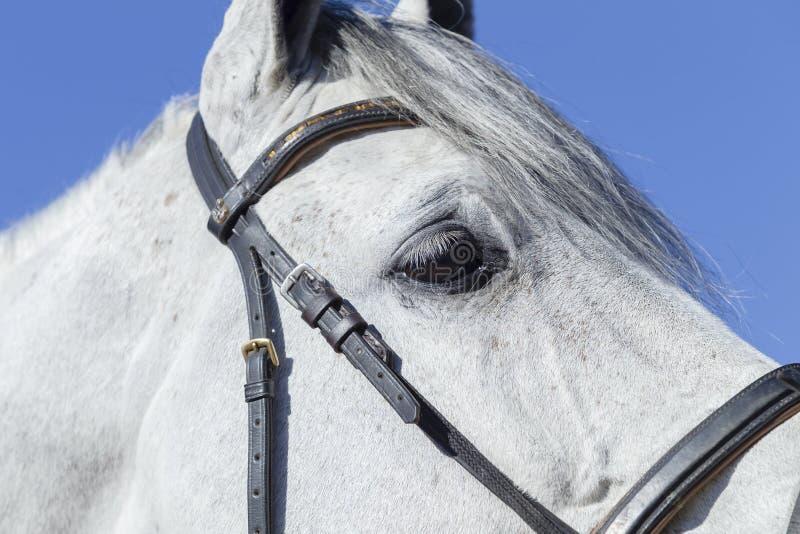 Horse Head Eye stock images