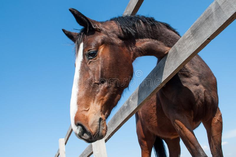 Horse head in the farm yard early spring close up. Side view royalty free stock photos