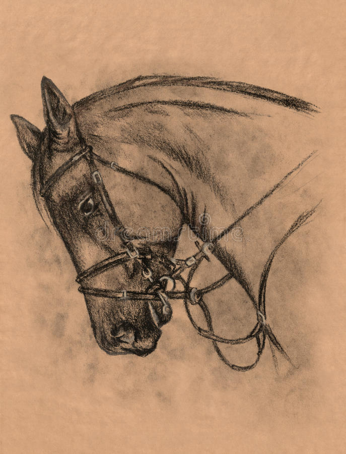 Horse head stock illustration