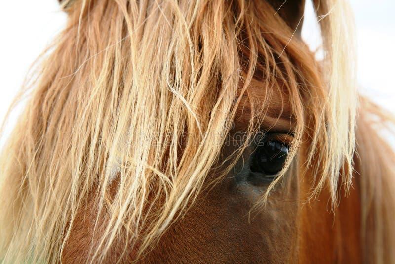 Horse Head Portrait Free Public Domain Cc0 Image