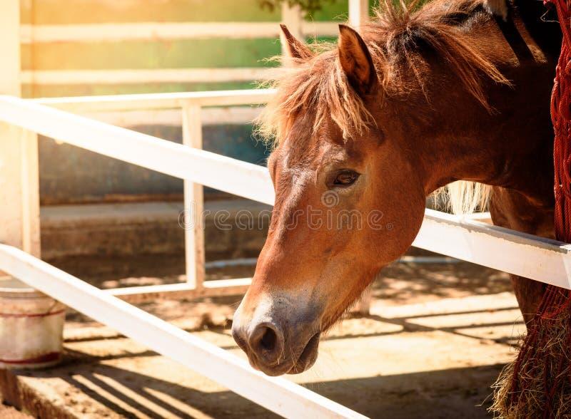 Horse head portrait. In farm royalty free stock photo