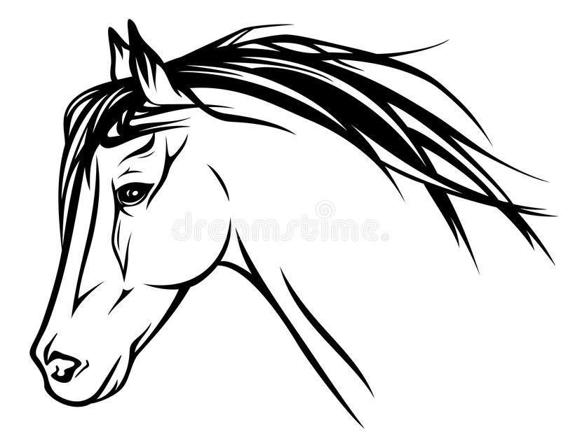 horse head vector stock vector illustration of arabian 27910085 rh dreamstime com horse head vector black and white horse head vector free download