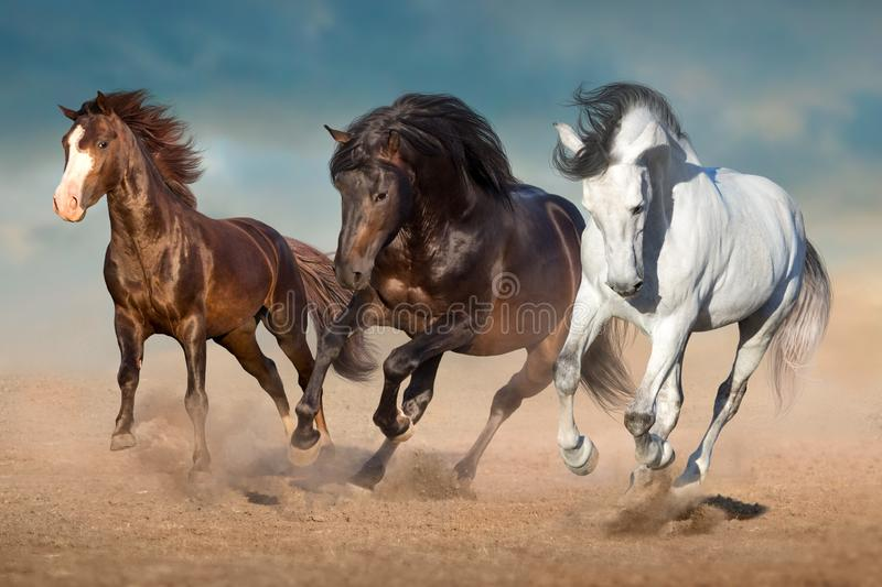 Three horse run in sand stock images