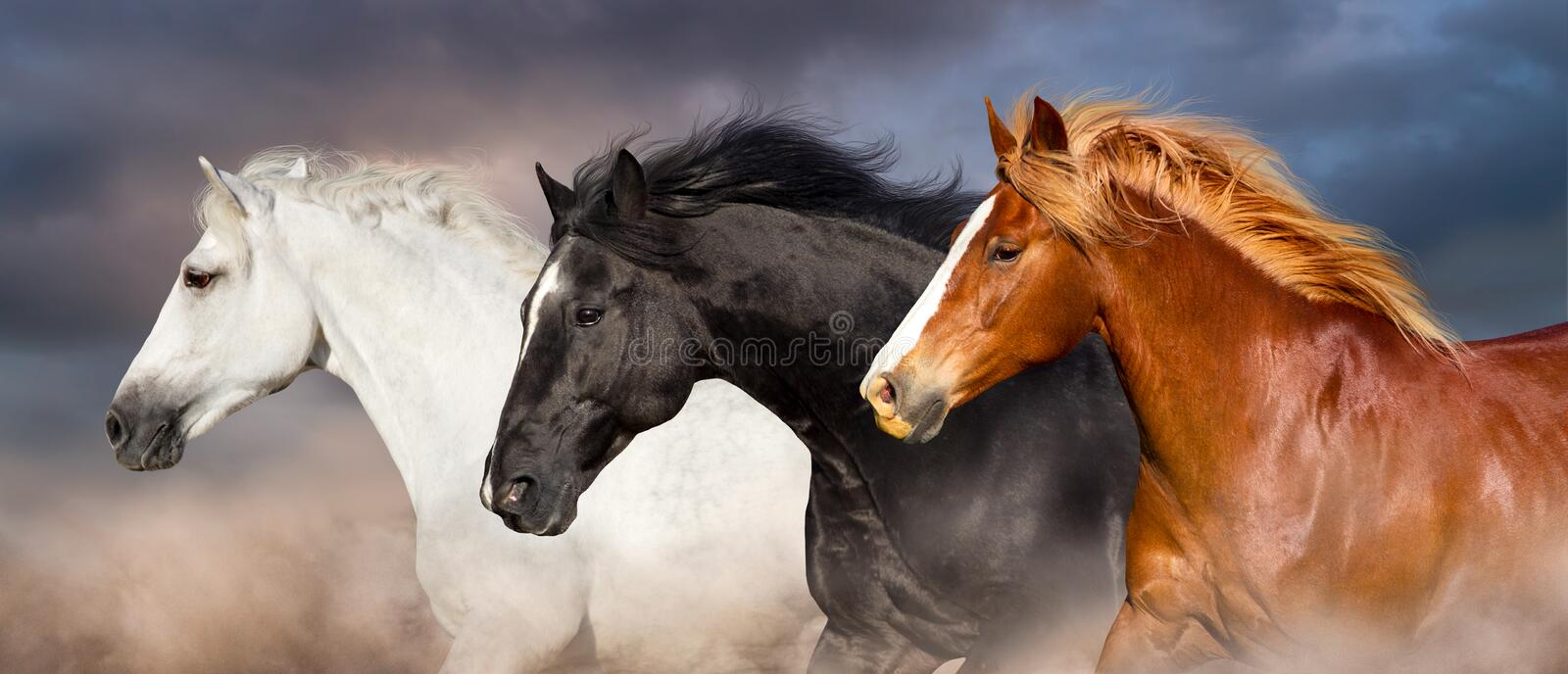 Horse herd portrait royalty free stock photos