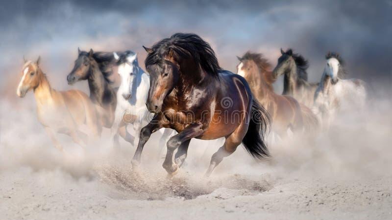 Horses run free stock photo