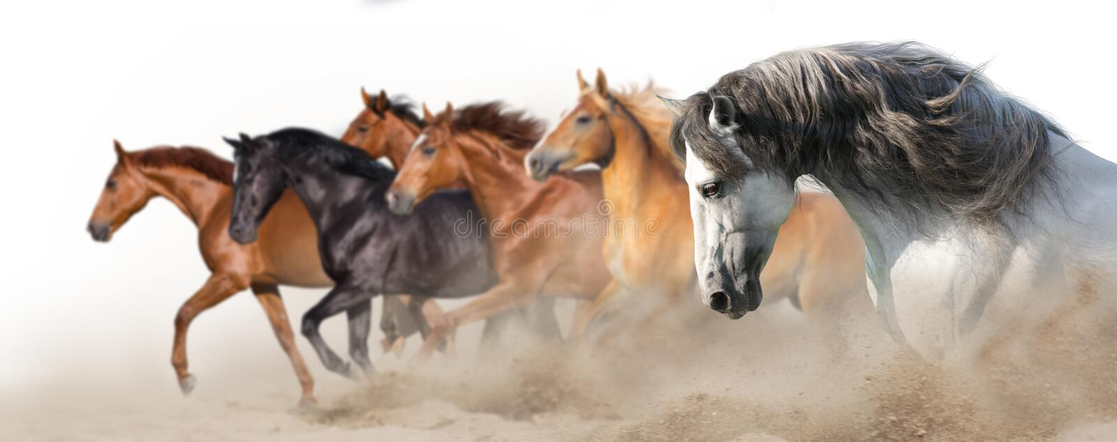Horse herd run on white stock photography