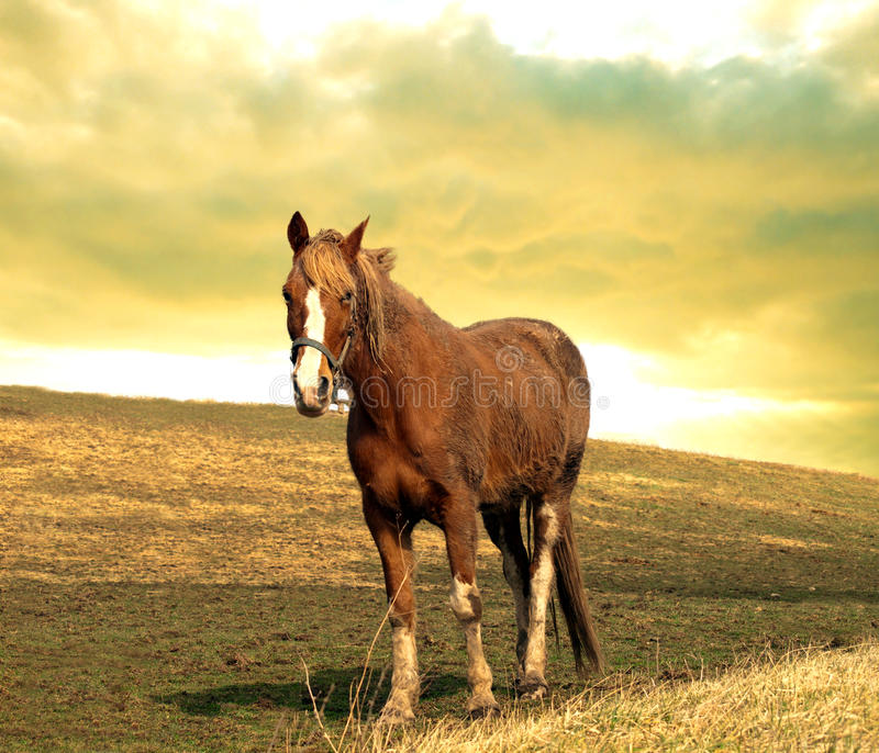 Download Horse on a hill stock photo. Image of nature, country - 24397208