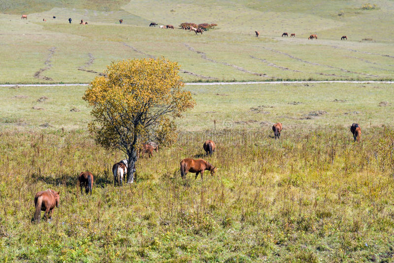 The horse on the hillside royalty free stock photos