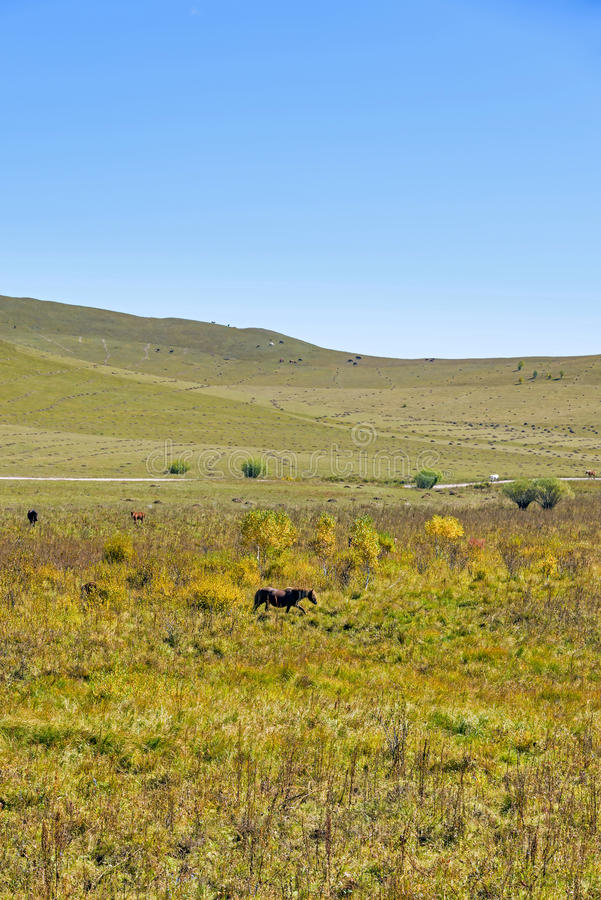 The horse on the hillside stock photos