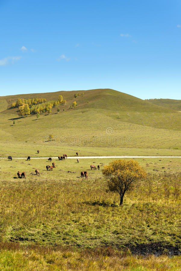 The horse on the hillside stock images