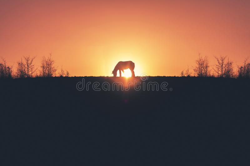 Golden Sunset Horse Silhouette royalty free stock photography