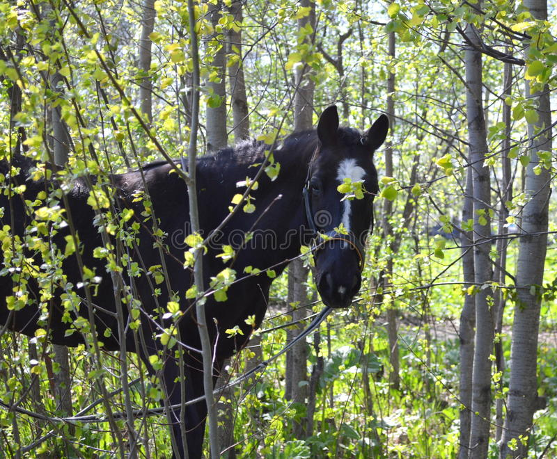 Download Horse stock image. Image of breed, developed, combination - 42107379