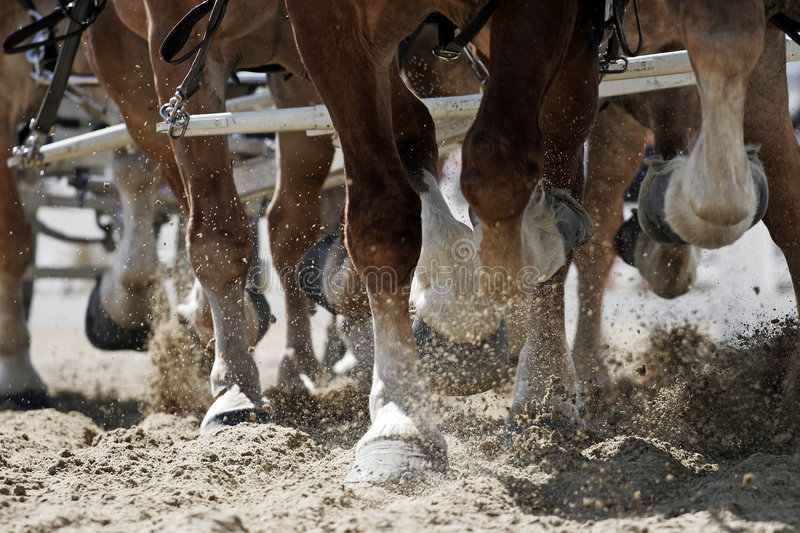 Horse Hooves in Action stock photography