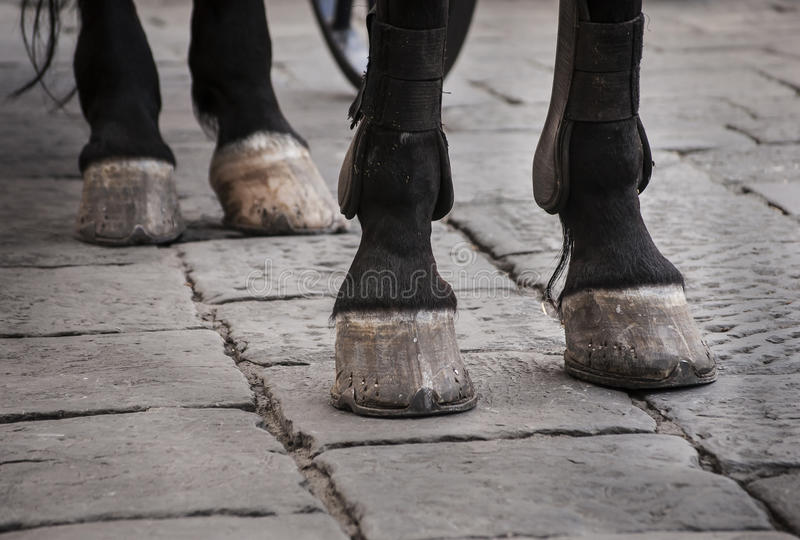 Download Horse Hooves On The Cobble Street Stock Photo - Image of guide, florence: 74936020
