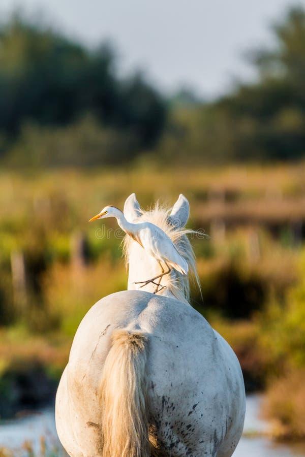 Horse, Horse Like Mammal, Livestock, Mane Free Public Domain Cc0 Image