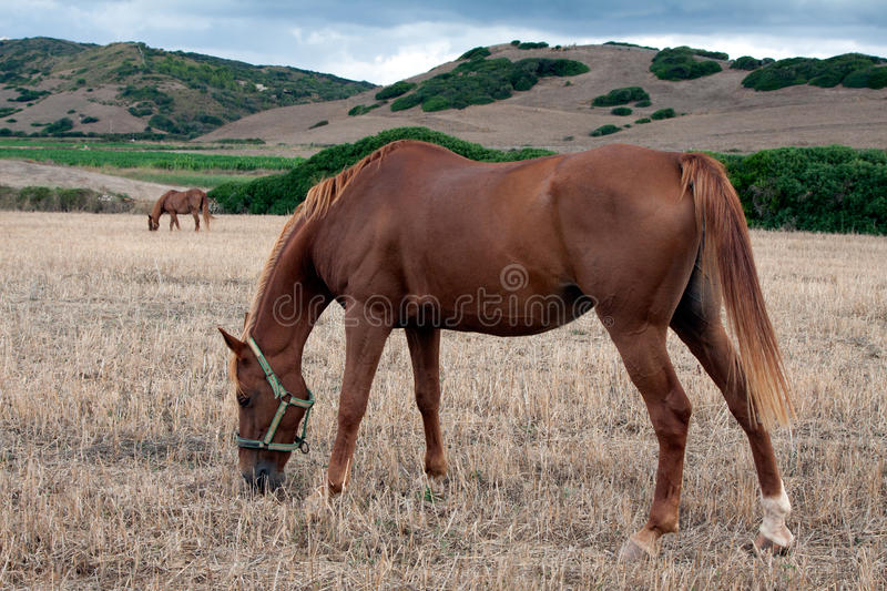 Horse1 stock images