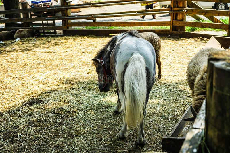 Horse image royalty free stock images