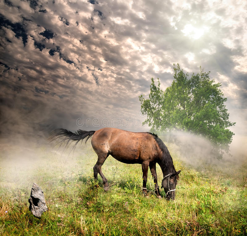 Free Horse In A Meadow Royalty Free Stock Images - 33141959