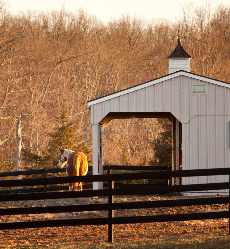 Free Horse In Paddock By Stable At Sunset Stock Image - 23408091