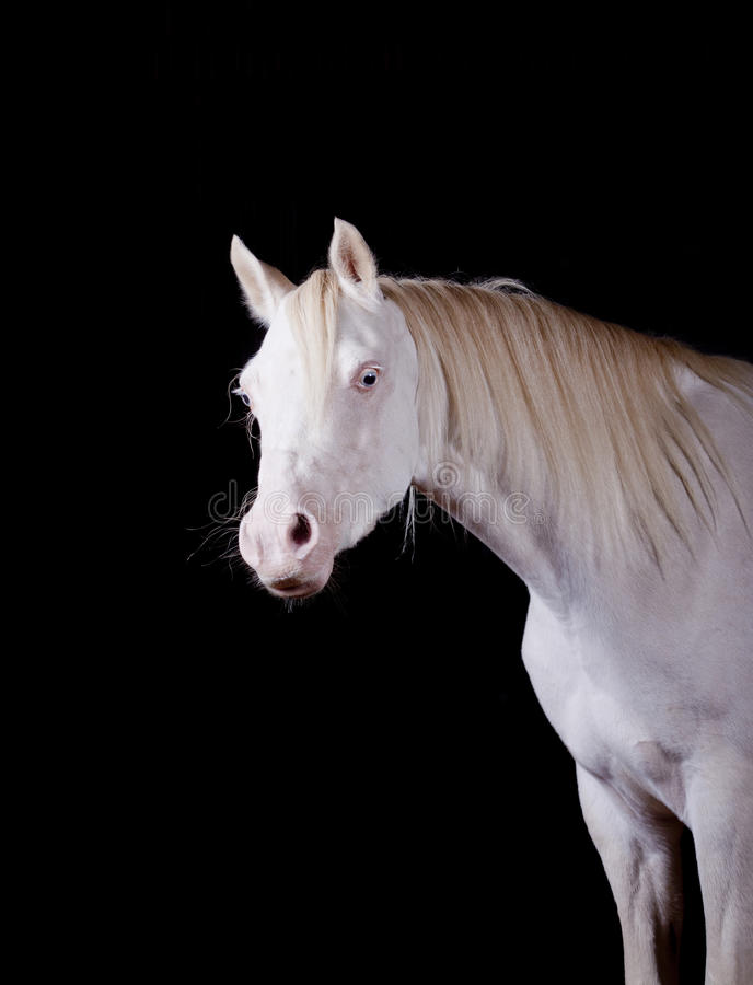 Download Horse indoors stock photo. Image of halter, equine, inquisitive - 24680392