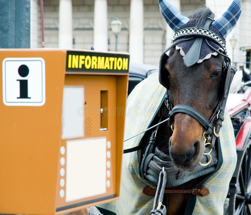Horse and information booth. Curious horse and information booth royalty free stock photography