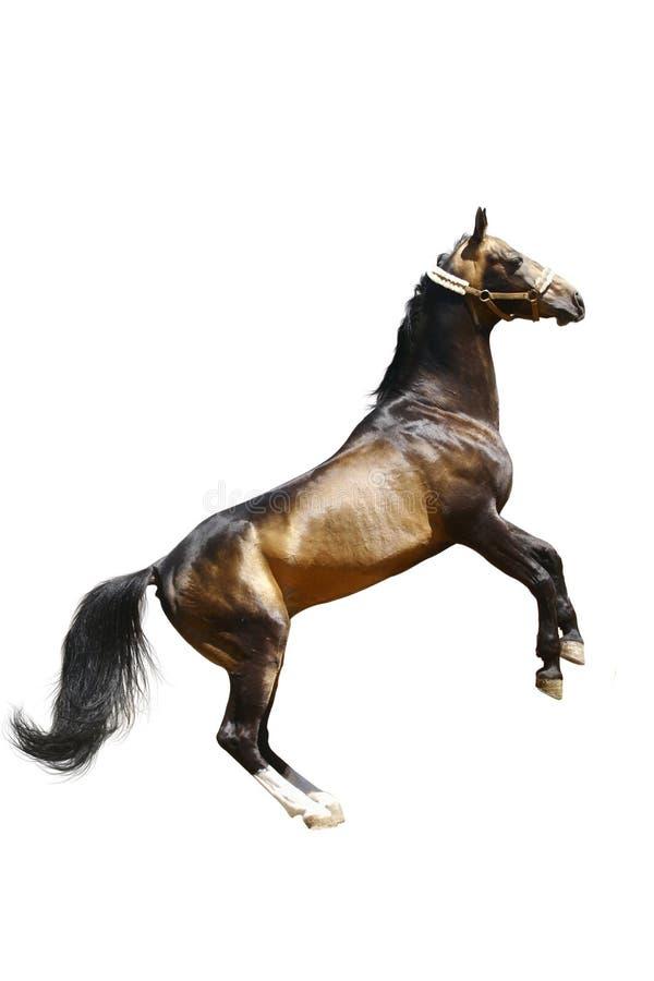 Download Horse isolated stock image. Image of jump, arabian, mane - 10079917