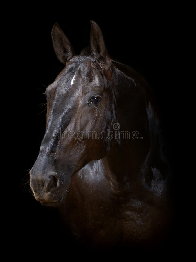 Horse isolated on black stock photography