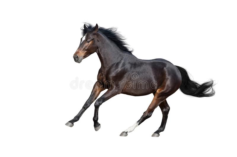 Horse isolated on white stock photos