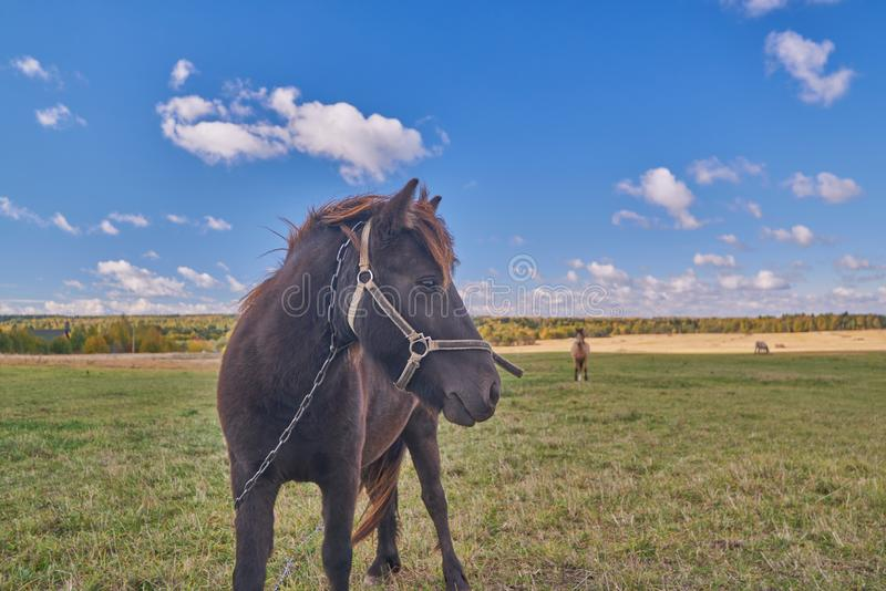 The horse and its foal on the summer field stock photo