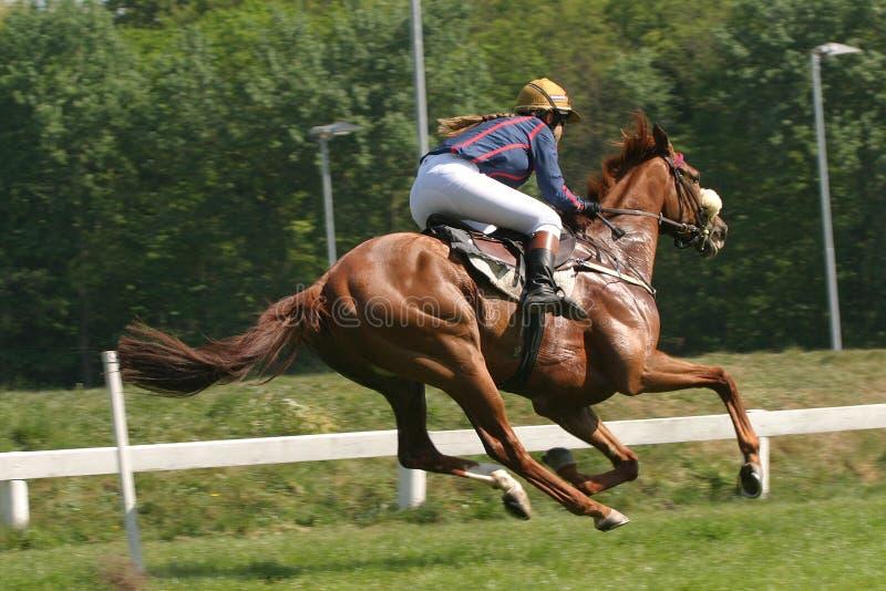 Horse and jockey royalty free stock photos