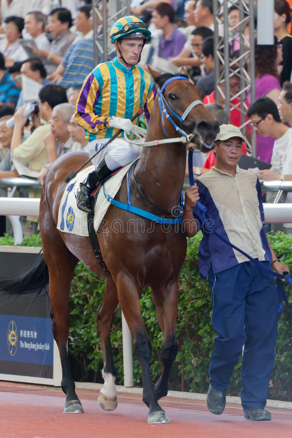 Horse with Jockey stock images