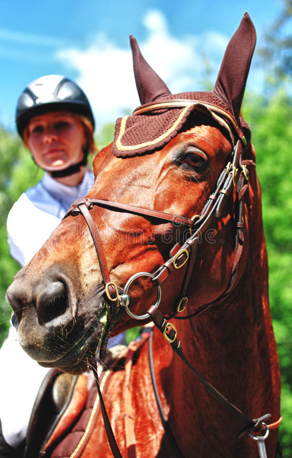 Horse With Jockey Royalty Free Stock Images