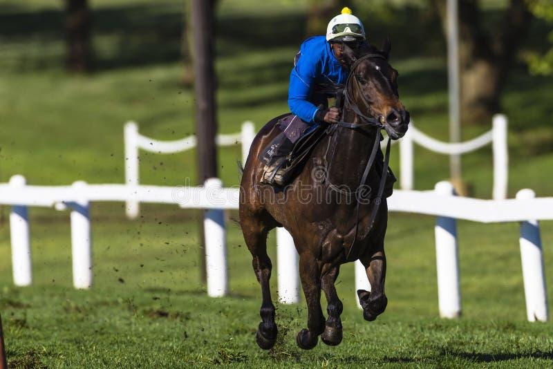 Horse Jockey Sprint Training royalty free stock photography