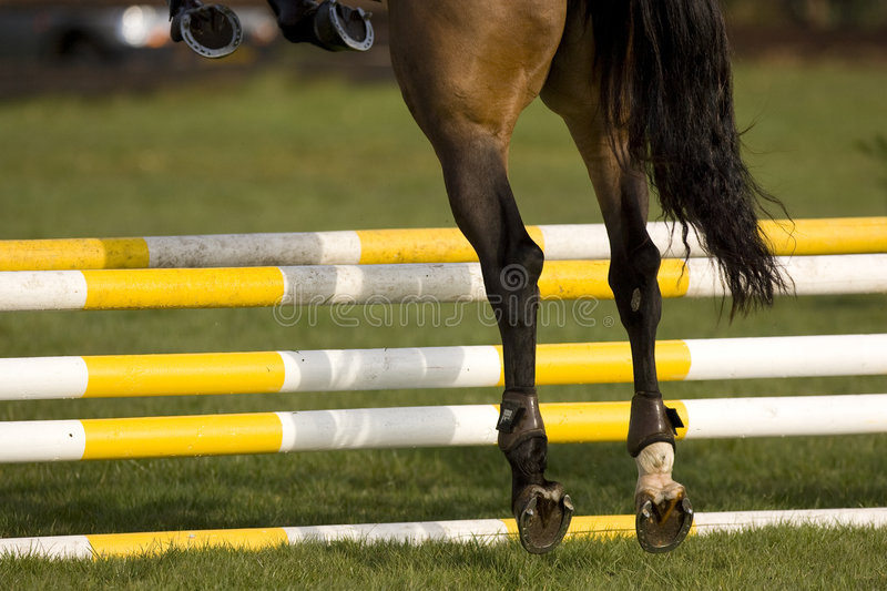Download Horse Jumping 001 stock photo. Image of shows, contest - 4894904