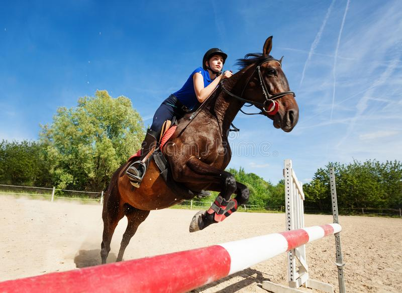 Horse jumping barrier during training at racetrack stock photography
