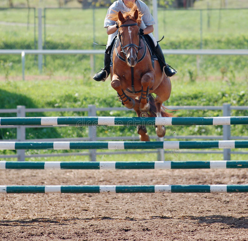 Horse at jumping competition. Brown horse at jumping competition royalty free stock photo