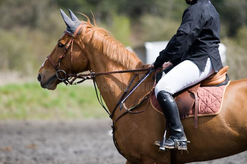 Horse on a jumping event stock image