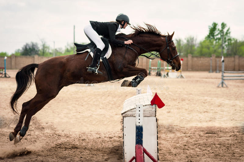 Horse jumping fence. Brown horse with horsewoman jumping fence, summer day royalty free stock images