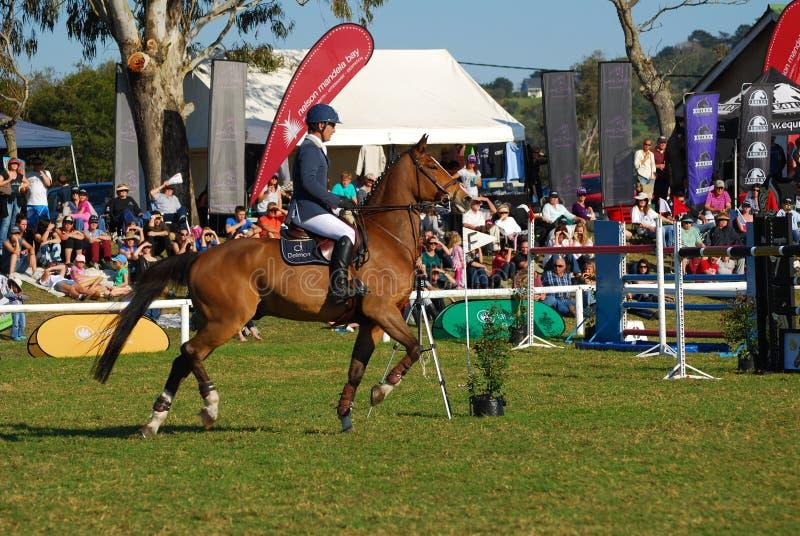 Horse jumping - Gareth Neill stock photography