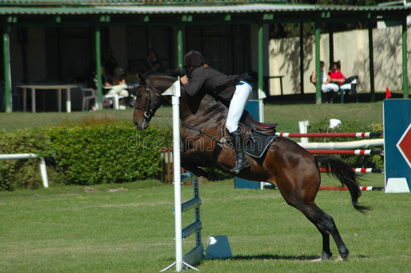 Download Horse jumping sport stock image. Image of hobbies, hurdle - 2251491