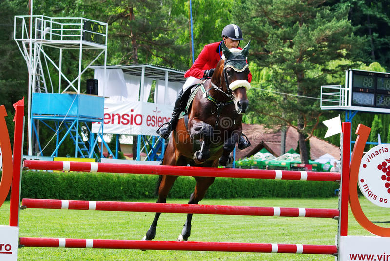 Horse jumping sport royalty free stock image