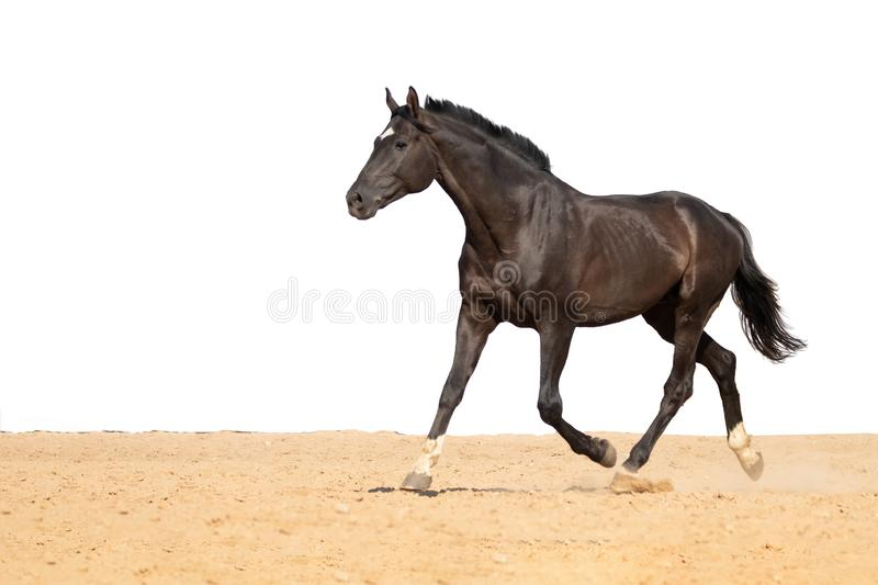 Horse jumps on sand on a white background royalty free stock images