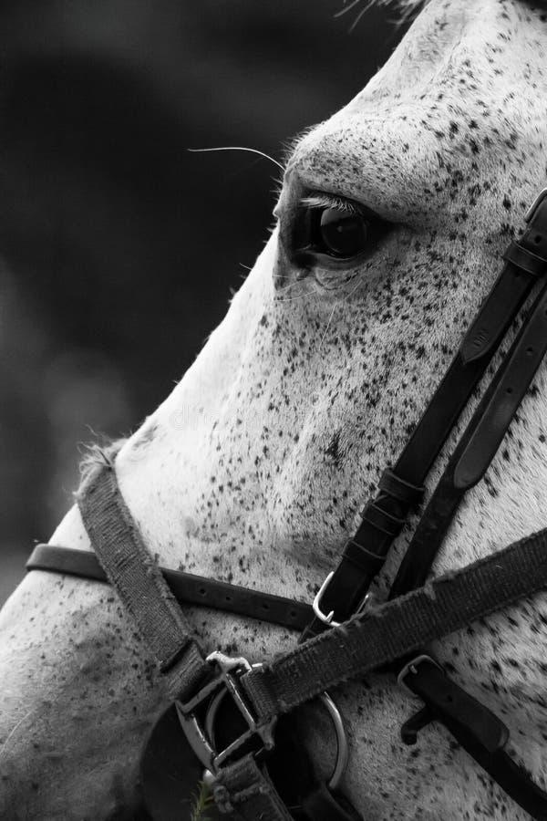 horse landbouwbedrijf, schone het paardstallen van Nice stock afbeeldingen