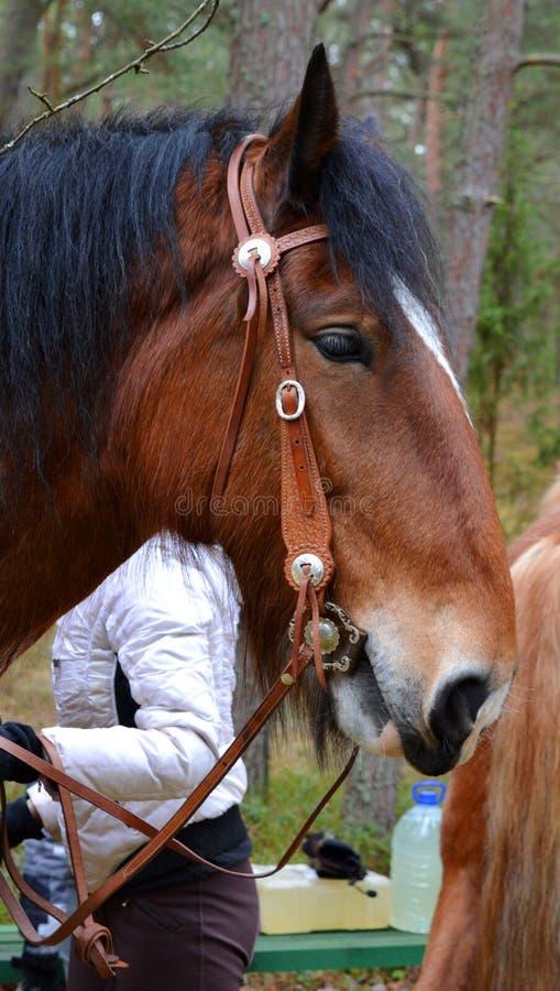 horse landbouwbedrijf, schone het paardstallen van Nice royalty-vrije stock afbeeldingen
